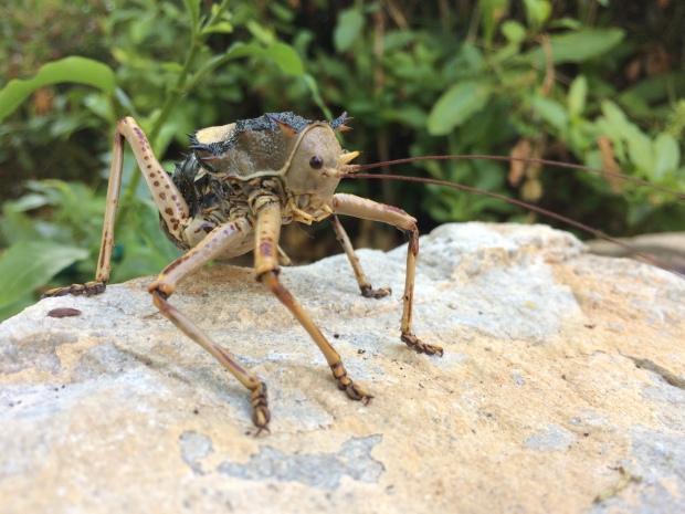 jiminy-cricket-1
