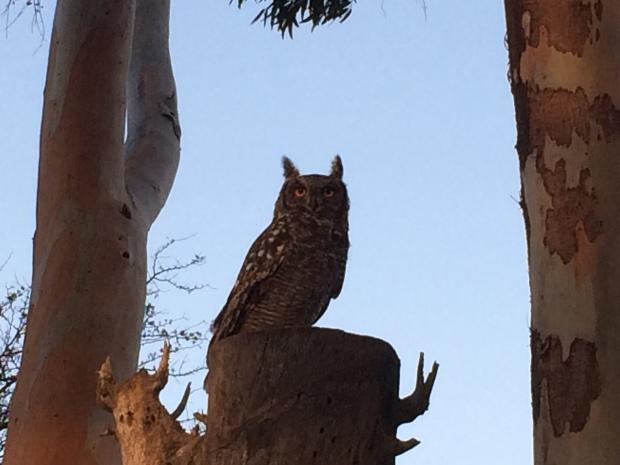 owl_feb17
